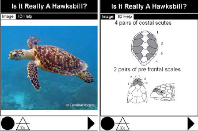 Marinte Turtle Helpscreen01Web 0